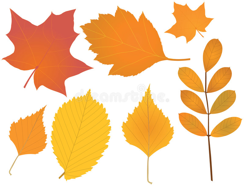 Download Autumn Leaves Royalty Free Stock Photography - Image: 7828947