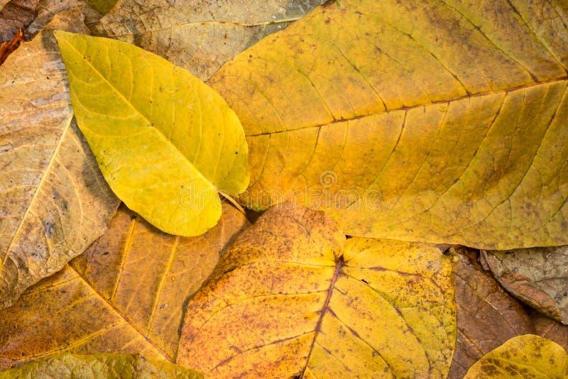Autumn Leaves fotos de stock royalty free
