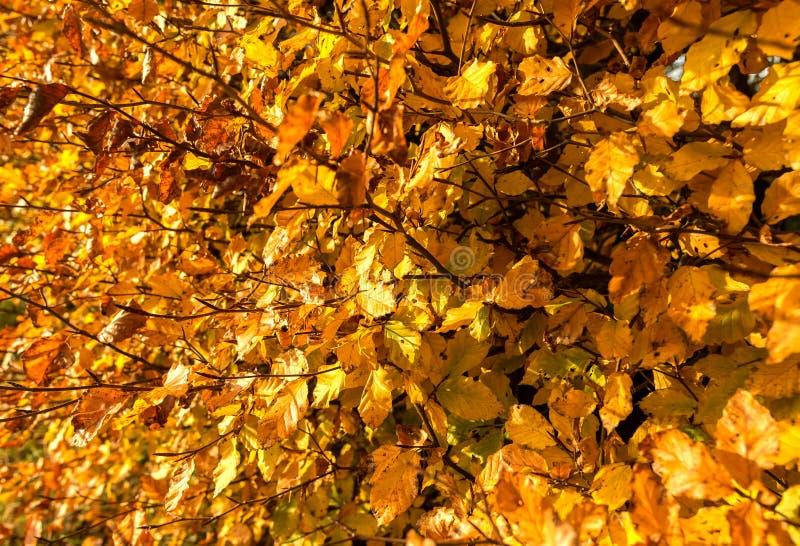 Autumn Leaves photographie stock libre de droits