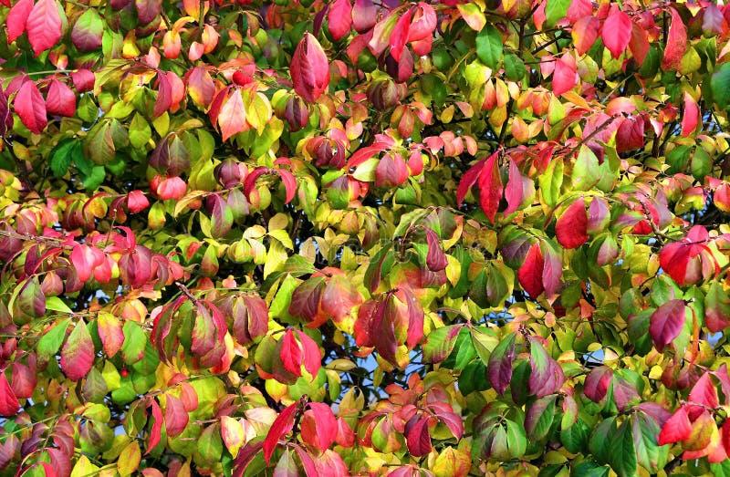 Autumn Leaves immagine stock