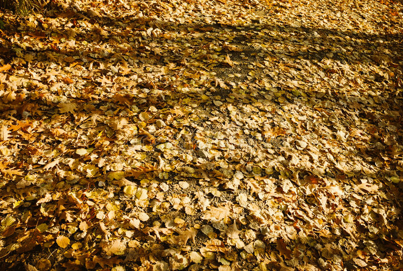 Autumn Leaves stock afbeeldingen