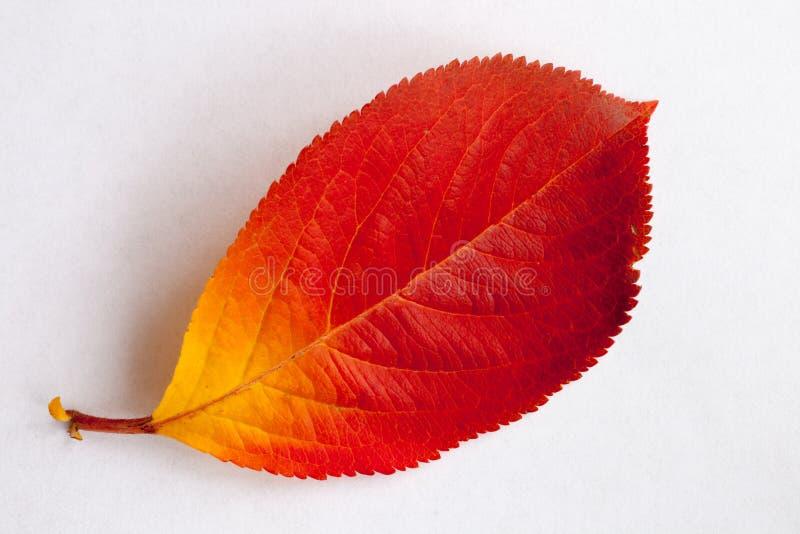 Autumn Leaves stockfoto
