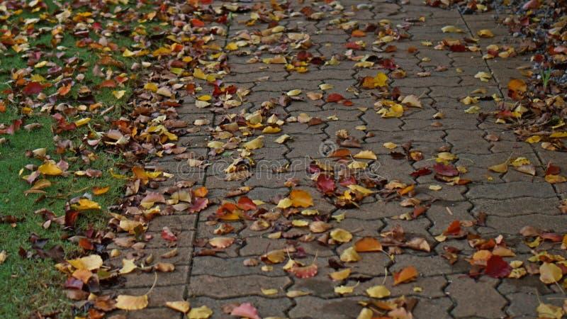 Autumn Leaves fotografie stock