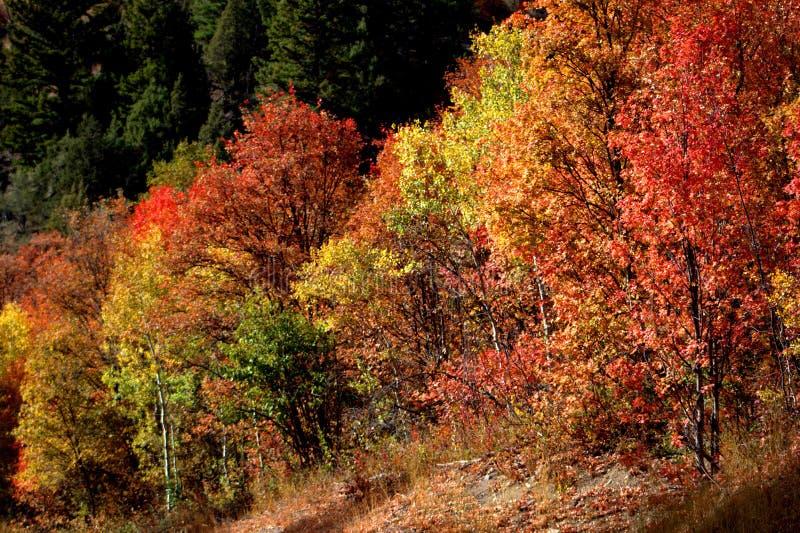 Autumn Leaves Ablaze immagine stock libera da diritti