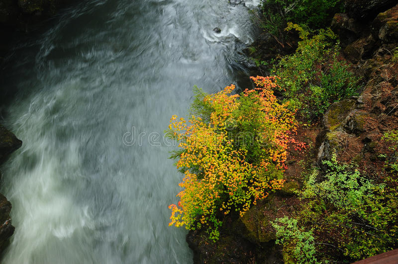 Autumn leaves above river stock images