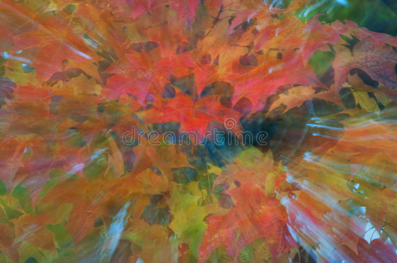 Download Autumn Leaves in Abstract stock image. Image of leaves - 16826371