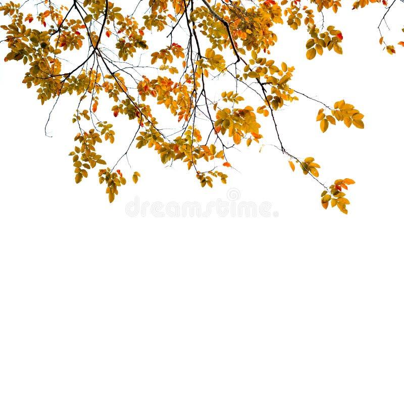 Autumn Leaves-achtergrond stock foto