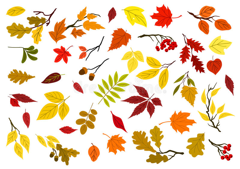Autumn leaves, acorns and tree branches vector illustration