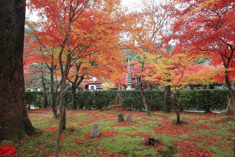 Autumn Leaves Of Adashino Nenbutsu -nenbutsu-ji stock foto's