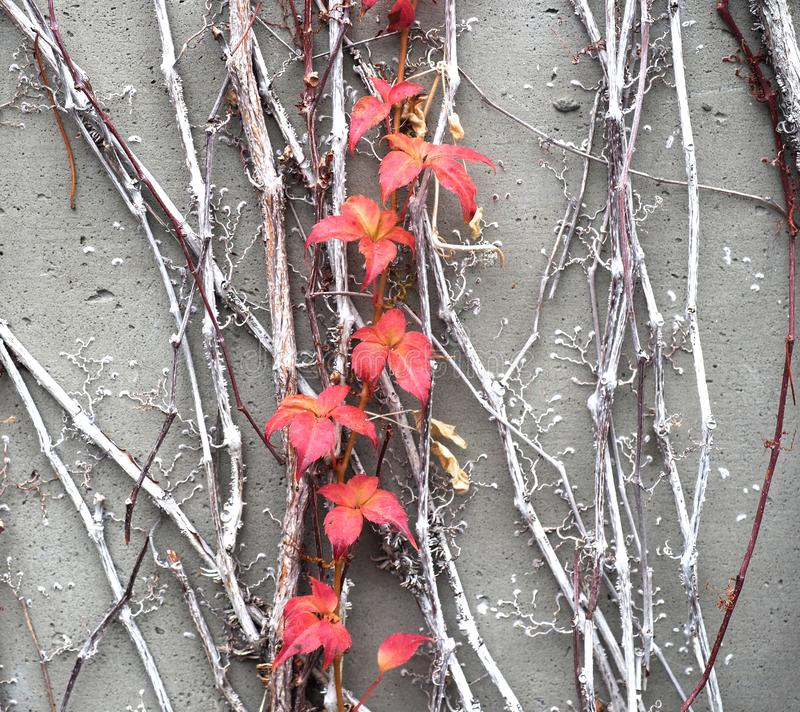 Autumn Leaves Against en Grey Slate Wall arkivfoto