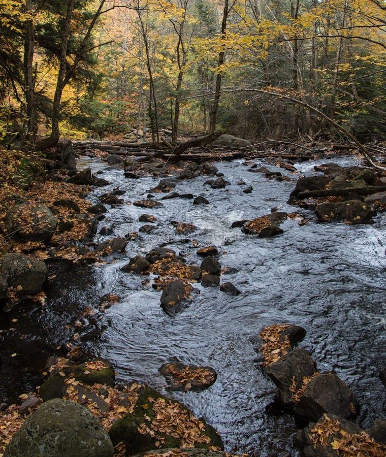Autumn Leaves al fiume in Algonquin immagini stock libere da diritti