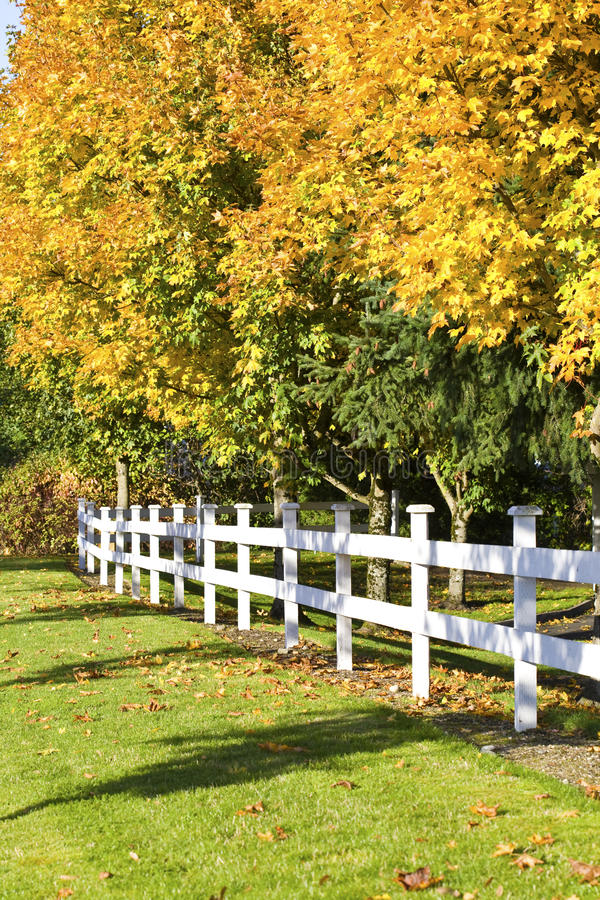 Download Autumn Leaves Along White Fence Stock Image - Image of season, sunny: 17432525