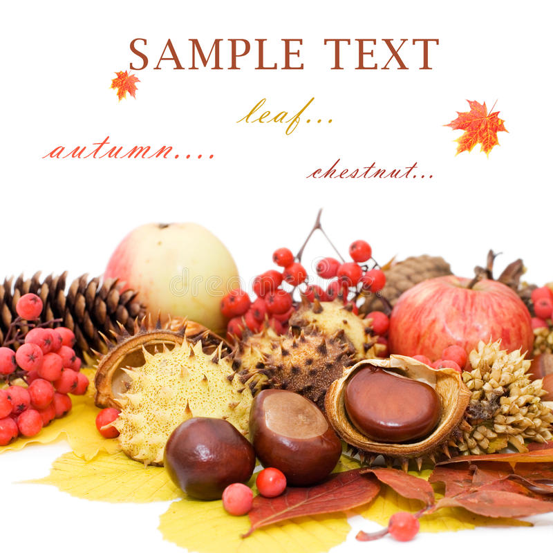Free Autumn Leaves And Fruits Royalty Free Stock Photo - 17070255