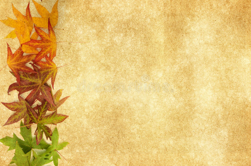 Autumn leaves on an antique textured background stock photography