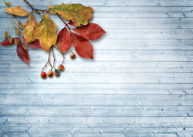 Autumn leaves and ashberry over wooden background with copy spac. Beautiful vintage wooden background with autumn leaves and a red mountain ash. with space for stock photo