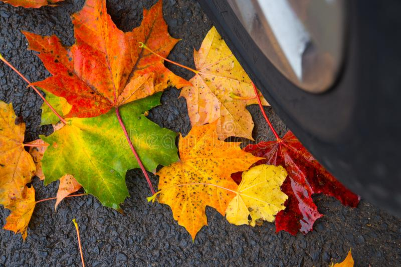 Autumn leaves with car wheel. Autumn leaves on asphalt with car wheel royalty free stock image