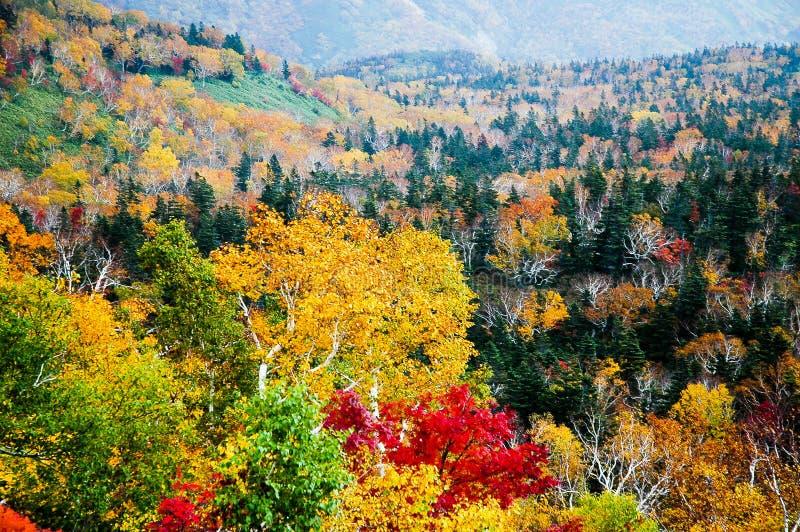 Autumn Leaves au passage de Shiretoko, Hokkaido, Japon image libre de droits