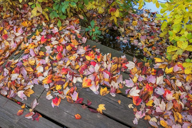 Autumn Leaves auf Dock stockfotos