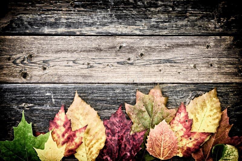 Autumn Leaves auf rustikalen Brettern - Unterseite lizenzfreie stockfotos