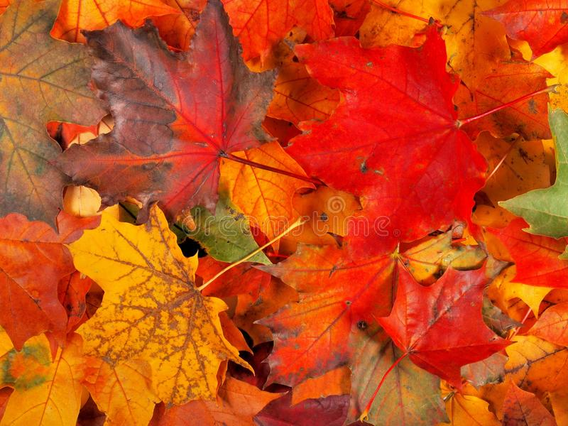 Autumn Leaves Background fotografia stock libera da diritti