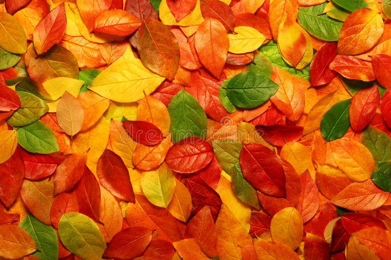 Download Autumn Leaves Background Royalty Free Stock Image - Image: 1341176