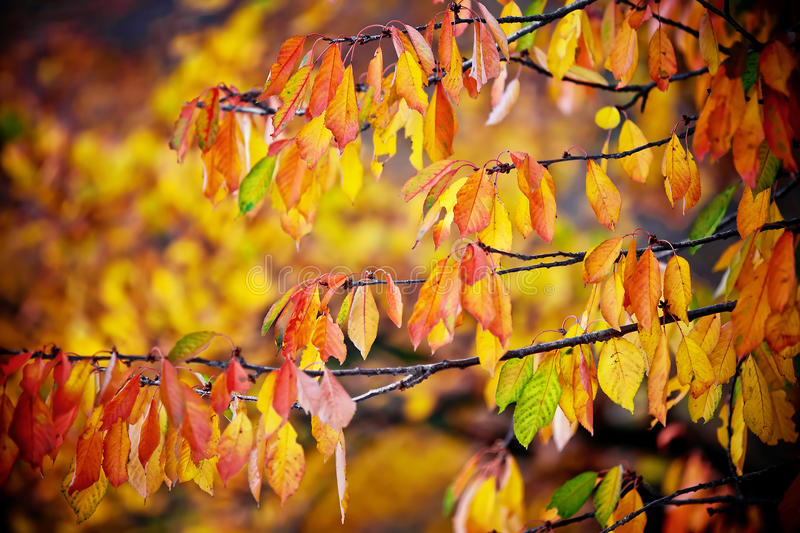 Download Autumn Leaves Background Royalty Free Stock Image - Image: 27688766