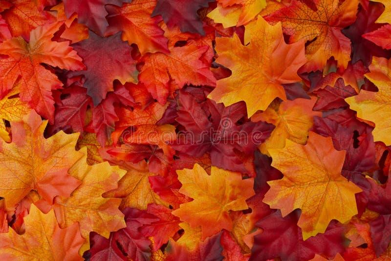 Autumn Leaves Background royalty-vrije stock afbeeldingen