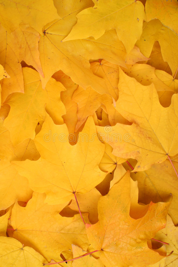 Download Autumn leaves background stock image. Image of pattern - 7064409
