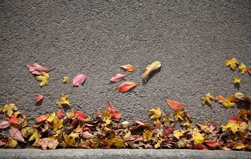 Autumn Leaves Background stock afbeeldingen