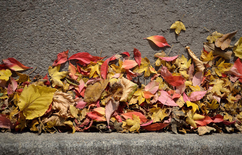 Autumn Leaves Background royalty-vrije stock afbeelding