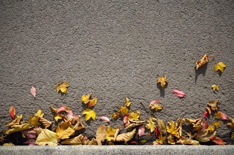 Autumn Leaves Background royalty-vrije stock fotografie