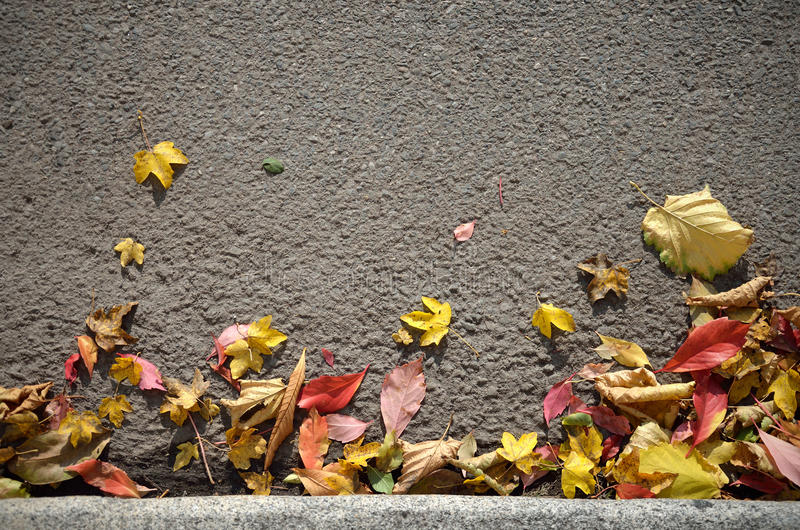 Autumn Leaves Background royalty-vrije stock foto
