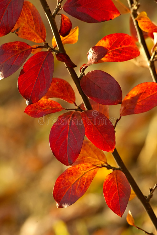 Download Autumn Leaves Background Royalty Free Stock Image - Image: 974236