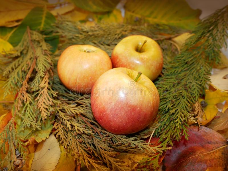 Autumn leaves background apples. Cozy fall food decoration. stock images