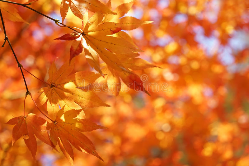 Autumn leaves background. Autumn leaves on a bright sunny bokeh background stock photo
