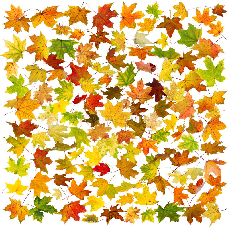 Download Autumn leaves background stock photo. Image of fall, flying - 33435784