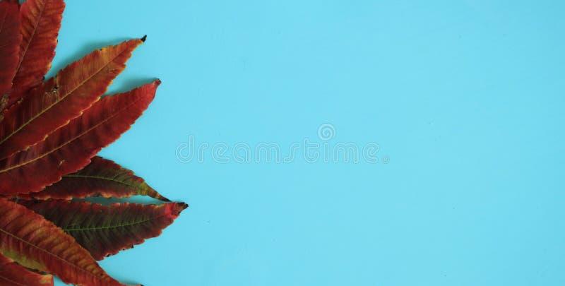 Autumn Leaves Background Rood, oranje blad stock afbeelding