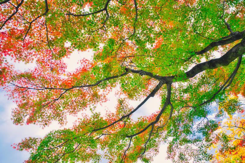 Autumn leaves in backlight. stock image