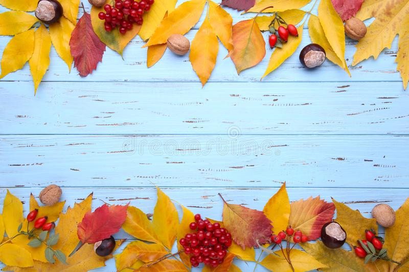 Autumn leaves with berries on a blue background stock photo