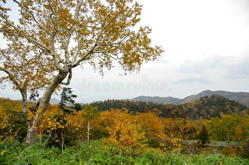 Autumn Leaves bij Shiretoko-Pas, Hokkaido, Japan stock fotografie