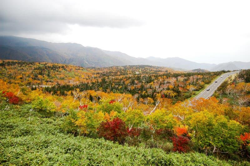 Autumn Leaves bij Shiretoko-Pas, Hokkaido, Japan stock afbeeldingen