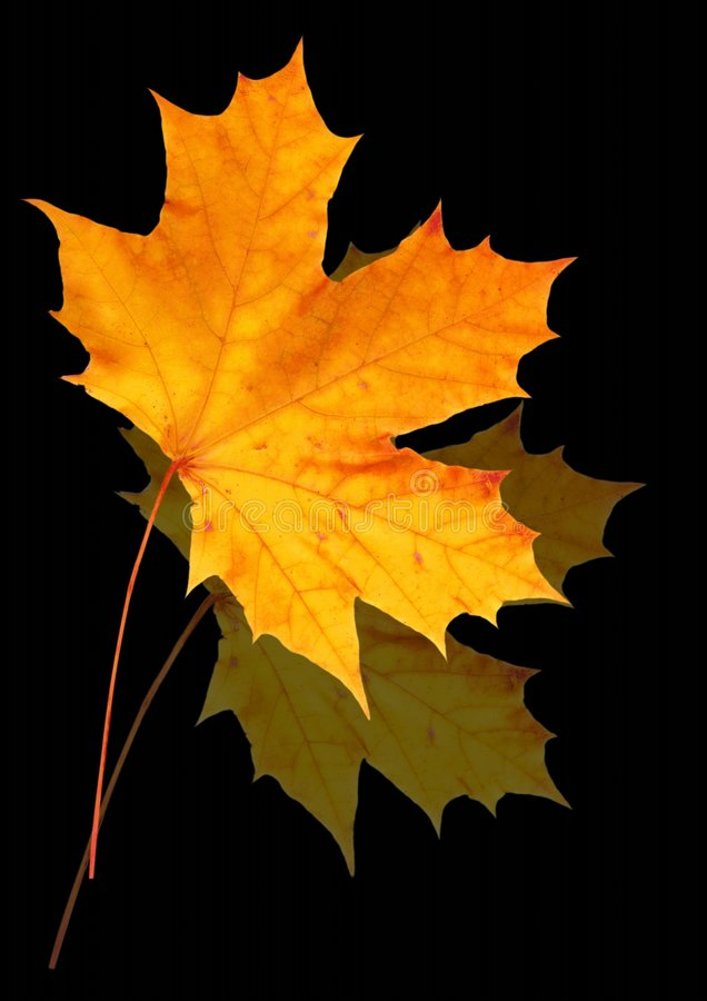 Autumn leaves on black stock photo