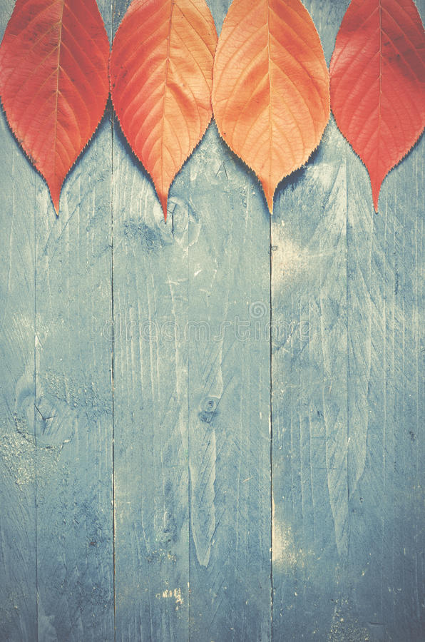 Autumn Leaves on blue, grunge, wooden background.  royalty free stock image
