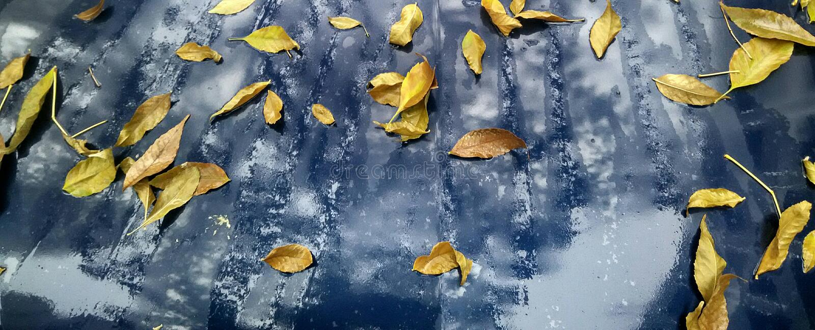 Download Autumn Leaves stock image. Image of leaves, rain, background - 83704879