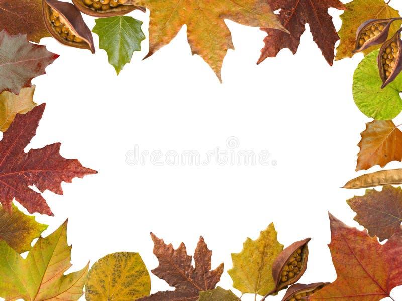 Autumn leaves border stock image