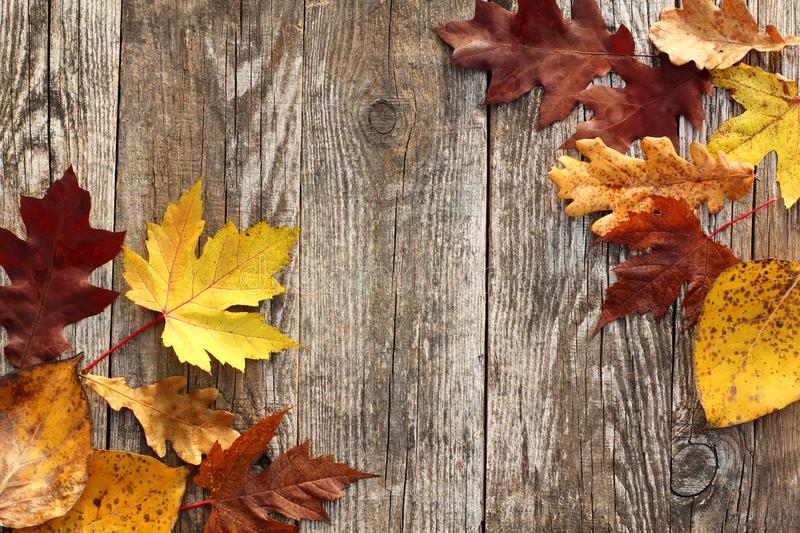 Autumn Leaves Border image stock