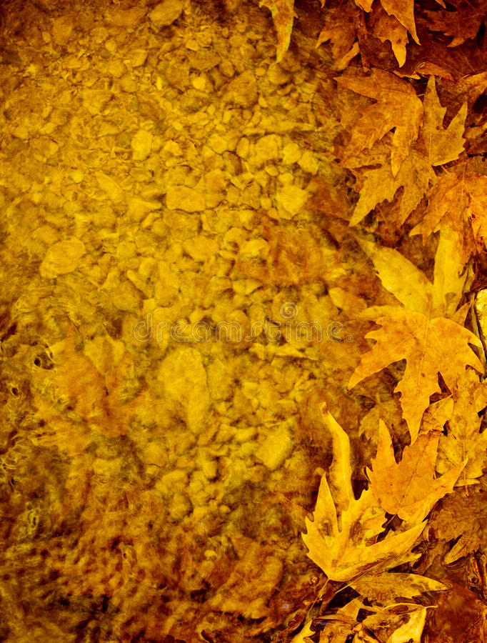 Autumn leaves border. Image of golden autumn leaves background, autumnal maple leaves border, old tree leaf in water puddle, yellow trees foliage, fall season stock photos