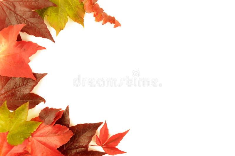 Autumn leaves border royalty free stock photo
