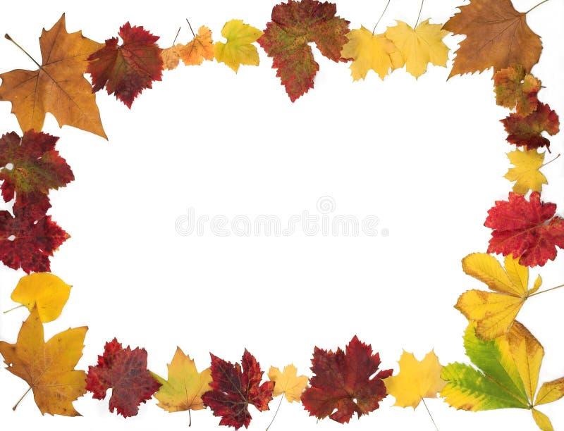 Autumn leaves border design stock image