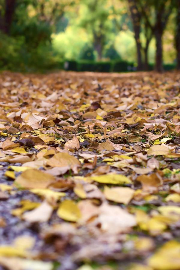Autumn leaves at botanical garden royalty free stock photography